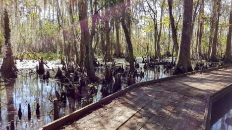 Strolling in the Barataria Preserve in Jean Lafitte National Historical Park & Preserve