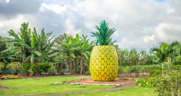 Top 10 Fun Things to Do in Oahu Hawaii - Must Do For Today