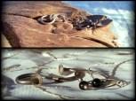 1-earrings, 2pr
