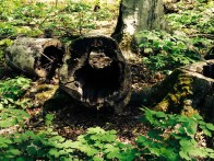 A really cool hollowed out log