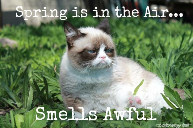 grumpy cat spring is in the air smells awful