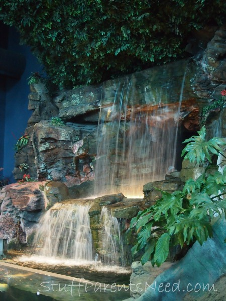 ripley's aquarium of the smokies 1