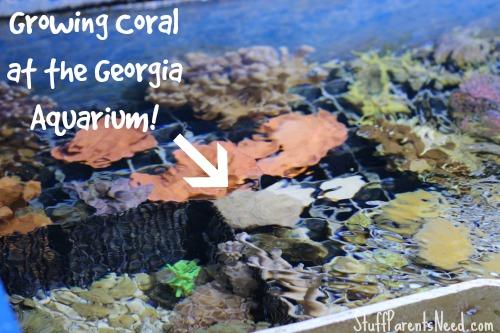 georgia aquarium review 3