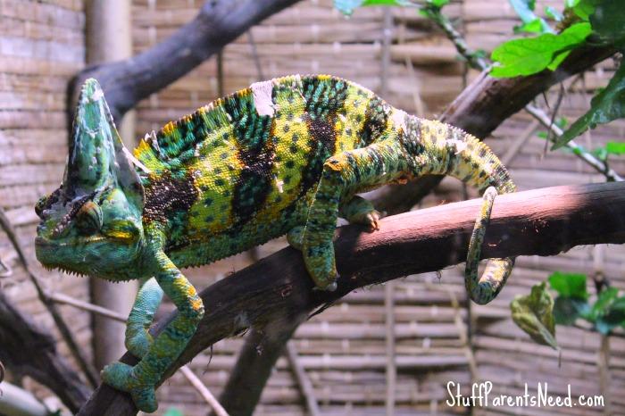 rainforest adventures review 2