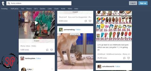 download tumblr videos