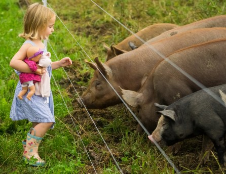 Farm to Ballet performances are accessible for kids