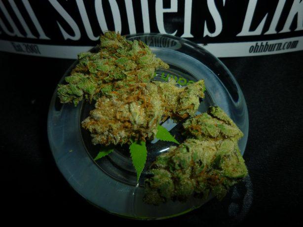 Star Dawg Marijuana Strain