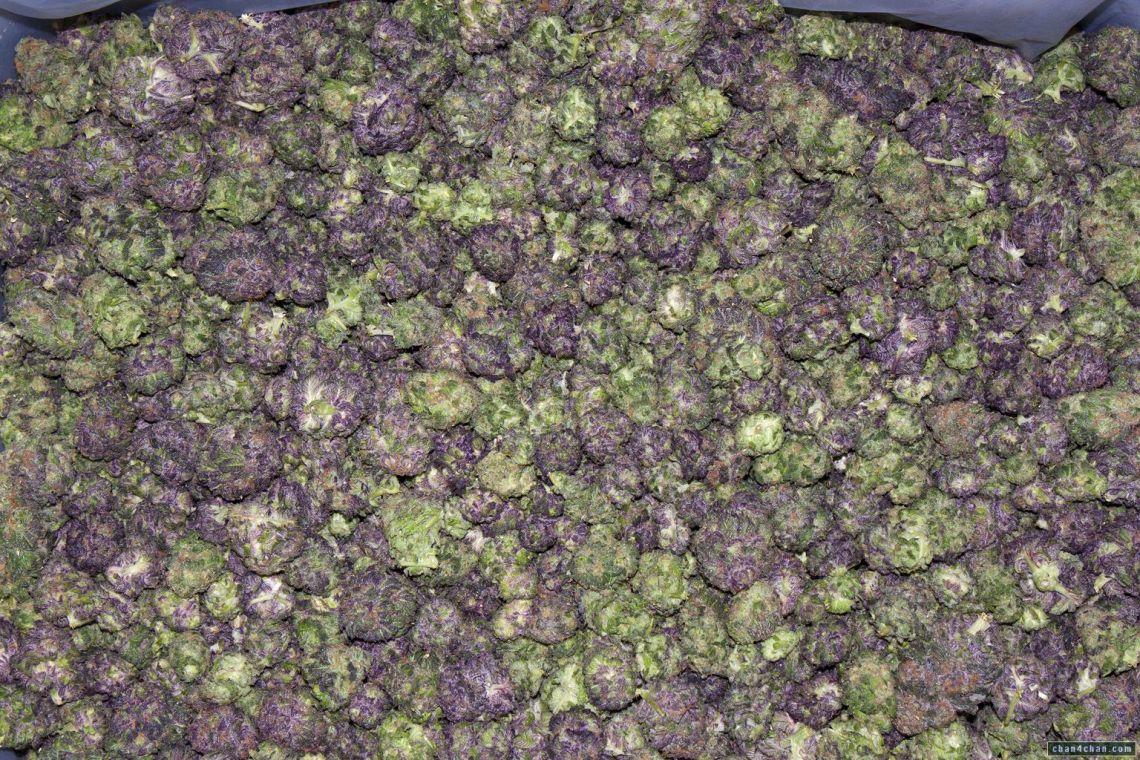hella purple weed