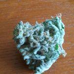 AK-47 marijuana strain from a local dispensary