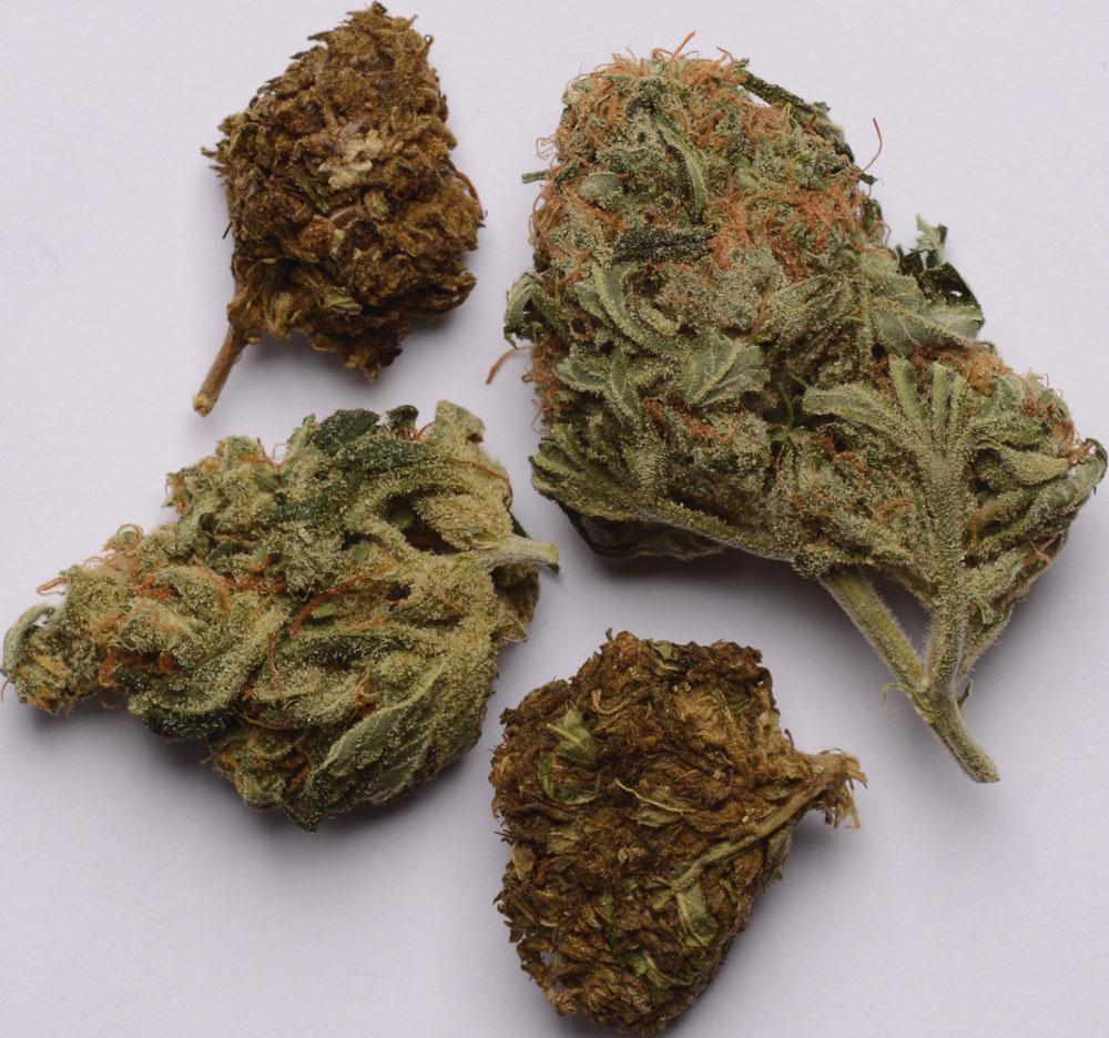 Bad Weed & Good Weed