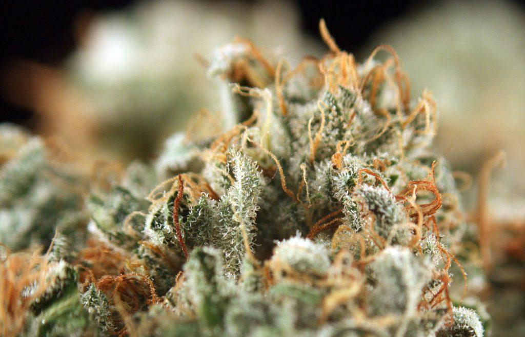 Gorilla Glue Weed