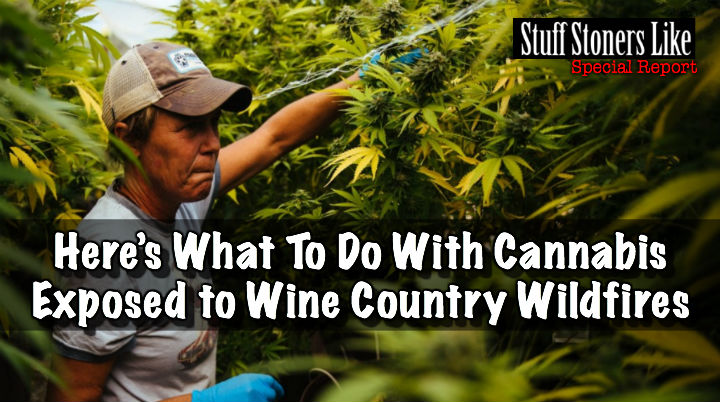 Wine Country Wildfires Cannabis