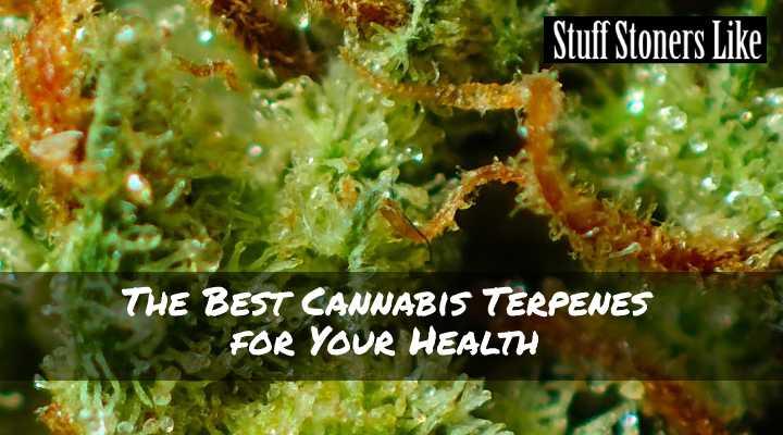 Best Cannabis Terpenes