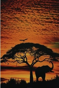 Elephant in the sunset poster