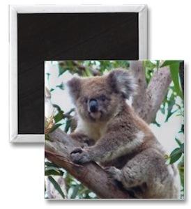 Koala photo magnet