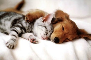 Dog and Cat cuddle poster
