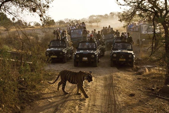 Tiger Territory, India
