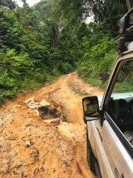 """La piste,"" enroute to Loango Lodge, Gabon"