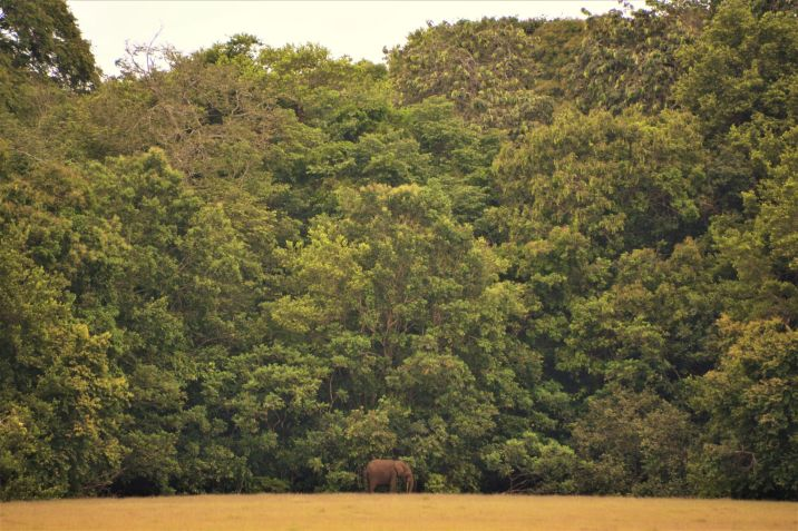 Tassi Camp Forest Elephant, Loango NP, Gabon