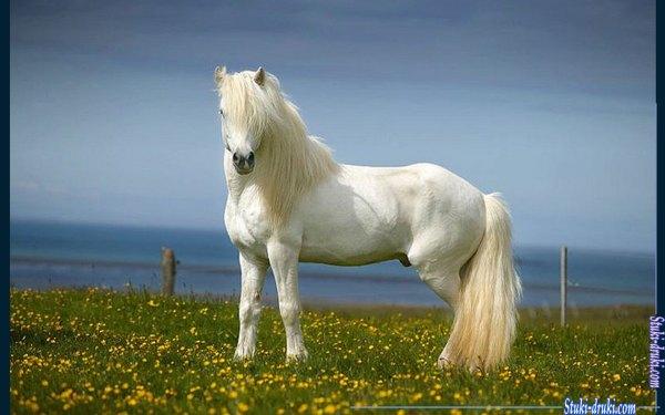 Фотогалерея Белые лошади