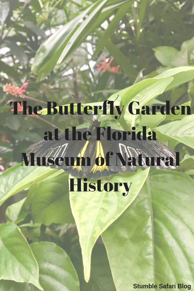 The Butterfly Garden At The Florida Museum Of Natural History