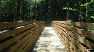 All bridges lead home
