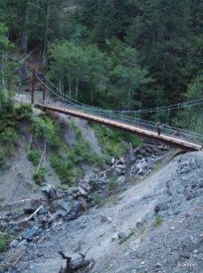 Big forests! (and bridges)