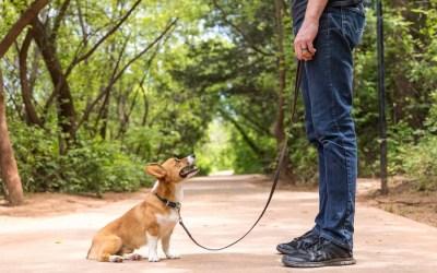 Wichita Falls' Best Dog-Friendly Spots