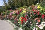 Buchart garden3