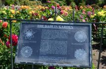 Dahlia-Garden-Sign-Large
