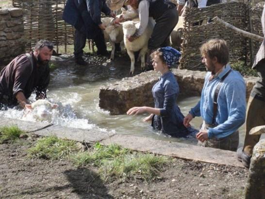 Far-Sheep-Wash-(13)