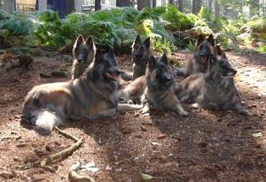 Stunt-dogs-film-and-Tv-portfolios-15