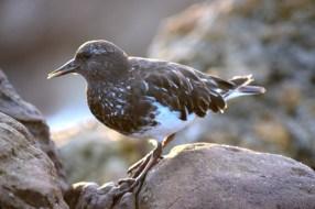bird-posing