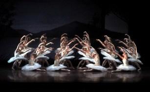 """Japan-Gastspiel, """"Schwanensee"""": Die Ladies des Stuttgarter Balletts, Foto: Stuttgarter Ballett"""