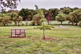 Cemetery 1 6110