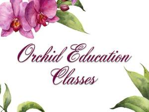Orchid-Education-Classes