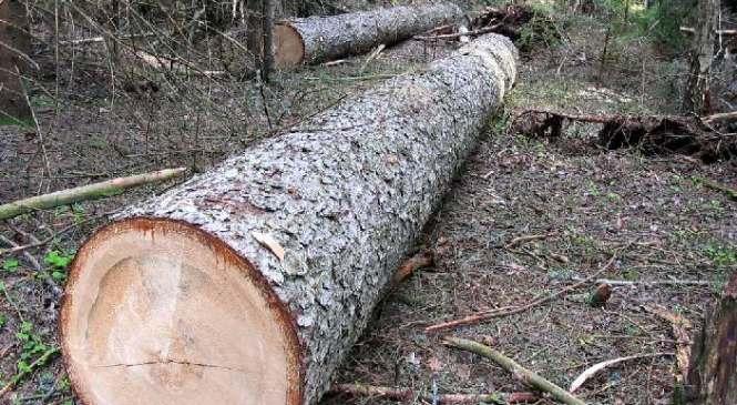 """На Прикарпатті дерево впало на """"чорних"""" лісорубів: двоє людей загинули (оновлено)"""