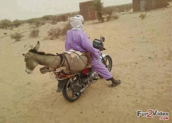 donkey on bike