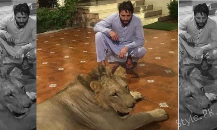 Shahid Afridi Breaks Silence Over Chained Lion Backlash