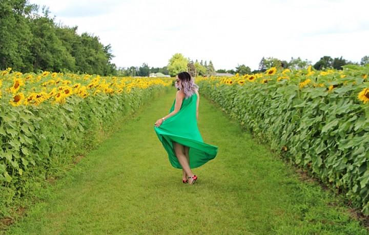 bogle-seeds-sunflower-field-toronto-ontario-32