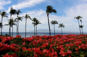 hyatt-regency-maui-resort-and-spa-review-13