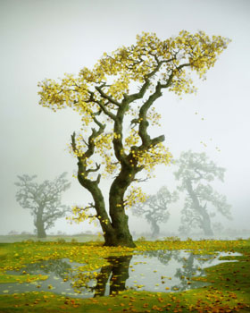 Didier Massard Autumn Tree Photo