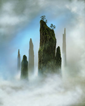 Didier Massard Tree Top Photo