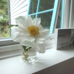 Sunday Bouquet: Truro Windowsill with Peony