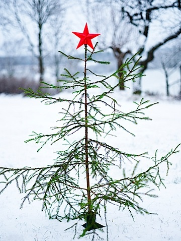SCANDINAVIAN WINTER CHRISTMAS TREE FOREST