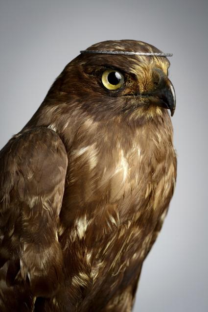 amy-shutt-brown-owl-tiara