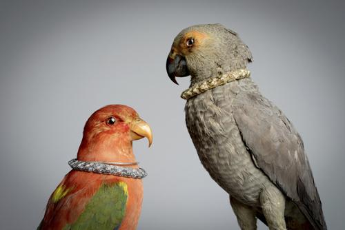 Digby & Iona Jewelry Photographer Amy Shutt