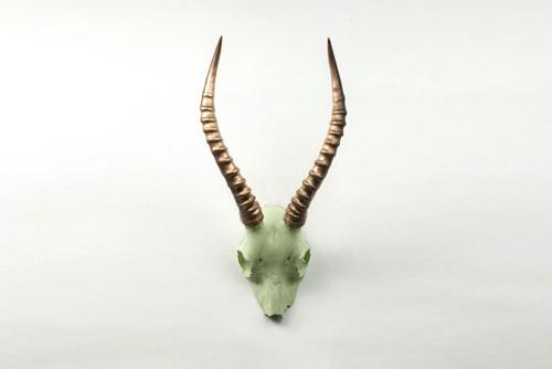 blesbok-skull-plate