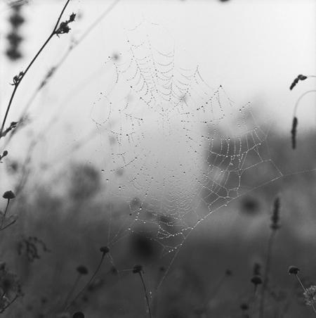 sally-gall-web-#-10