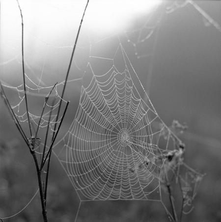 sally-gall-web-#-2